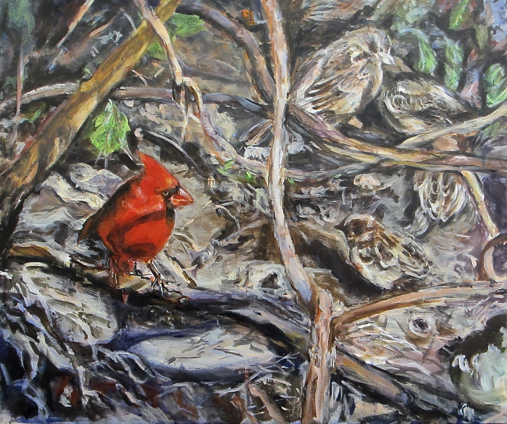 Cardinal and Sparrows